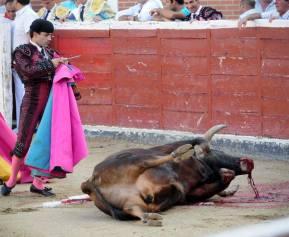 Cada son asesinados más de 250 mil toros en las plazas  solo por diversión.
